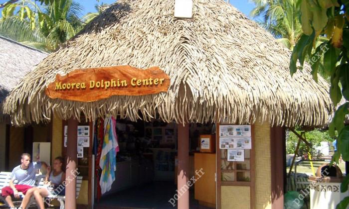 toiture synthétique en feuille de palmier Dolphin Quest