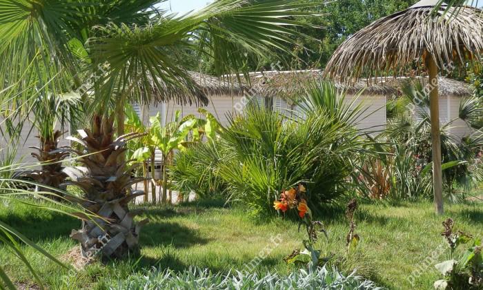 toit feuille de palmier exotique Saint-Aygulf