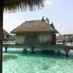 Club Med Kani techos sintética exótica Palmex